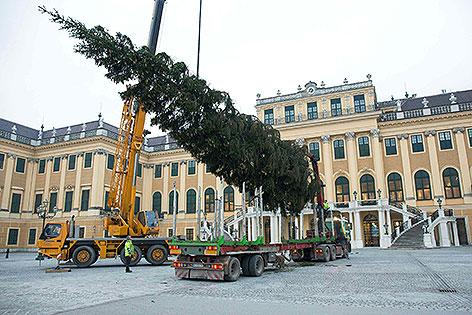 Baum Schönbrunn