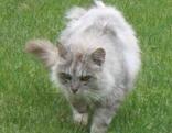 """Katze """"Molly"""""""