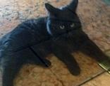 Schwarzes Kätzchen im Gasthof