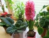 Fenster mit Zimmerpflanzen