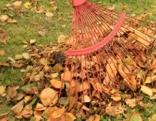 Laub Rasen Herbst