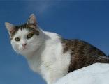 Dreibeinige Katze Winny