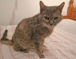 Schwarz-braune Katze sitzt auf Bett