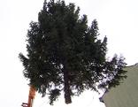 Transport des Christbaums für die FUZO Eisenstadt