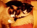 Zwei Katzen liegen umschlungen in einem Korb