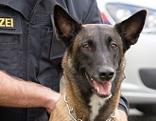 Drogenhund Polizeihund Kiara Heroin Heroinfund Drogen