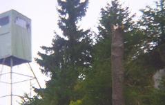 Prozess Wilderer Bäume gefällt