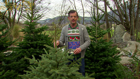 Fernsehgärtner Karl Ploberger mit lebenden Christbäumen