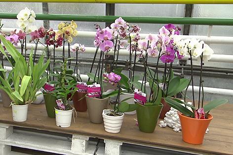 orchideen tauchen orchideen tauchen orchideen tauchen so einfach geht 39 s mehrere orchideen. Black Bedroom Furniture Sets. Home Design Ideas