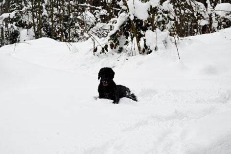 Schwarzer Hund liegt im Schnee