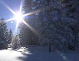 Schnee Schneebilder Sonne Wald