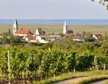 Blick aus den Weingärten nach Rust