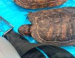Gerettete Schildkröten in Unterhöflein