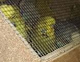 Vögel in Käfig