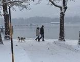 Winterspaziergang Schnee Hund