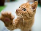 Junge Katze streckt Pfote in die Kamera