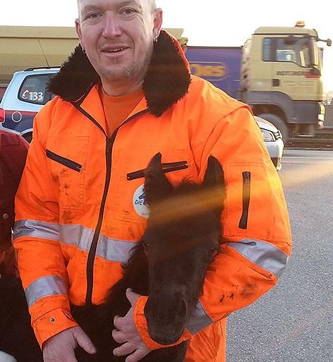 Ein Mitarbeiter der MA 48 mit dem geretteten Fohlen.