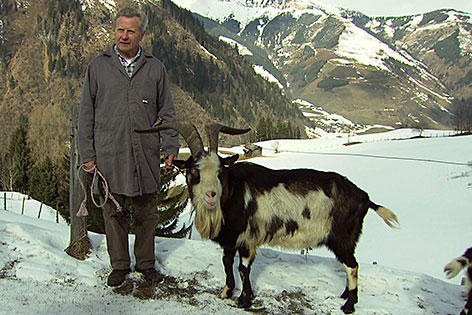 Tauernschecken-Züchter Hans Wallner mit einem Ziegebock