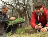 Gut gepflanzt Gemüsebeet