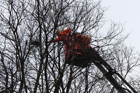 Katze sítzt auf Baum fest