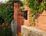 Mauer mit Wein und Efeu