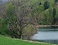 Narava jezero Karavanke gore travnik Dobniško Dobško