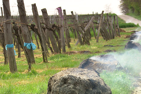 Feuer in Weingarten als Frostschutz