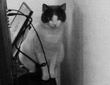 Katze im Nonntal entlaufen