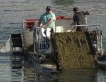 Alte Donau Algen Mähboot