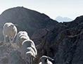 Ernest Kaltenegger stranpoteh ovce linksabbieger