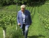 Weingarten am Rainberg
