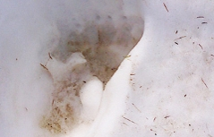 Bärenspur im Schnee