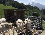 Bauernhof Breuss