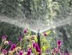 Garten gießen
