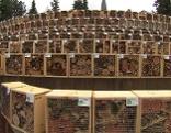 Weltrekord Insektenhotel