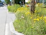 Artenvielfalt Straßenrand