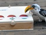 Im Tropenhaus des Haus des Meeres sagt ein exotischer Vogel des Ausgang von EM-Spielen voraus.