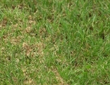 sommerfitter Rasen