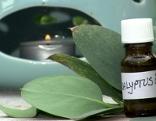 Eukalyptusdurft im Schlafzimmer