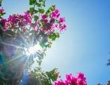 Sommer und Sonne