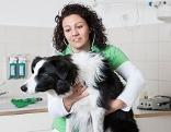 Tierärztin Verena Grissmann bei der Untersuchung eines Hundes in ihrer Praxis