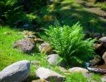 Farn / Garten im Schatten