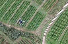 Weingarten von der Drohne aus gesehen