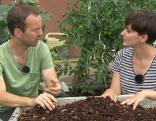 Gut gepflanzt Richtig gießen
