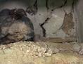 Človičje košće u pandrofskoj crikvi