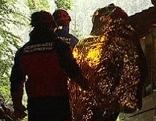 Aus der Lamprechtshöhle gerettet Urlauber mit Höhlenrettern