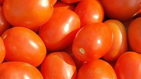 Paradeiser, Tomaten