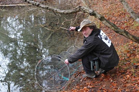 Gef hrliche goldfische radio tirol for Goldfische gartenteich winter