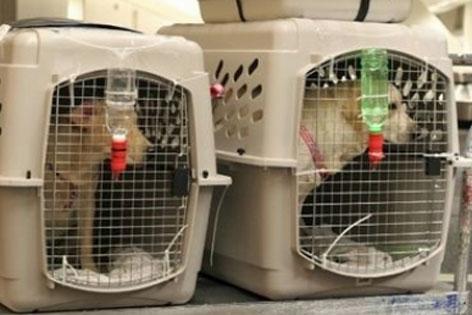 Zwei Hundeboxen mit Hunden für Flugreise
