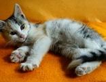 Katzenbaby auf Decke